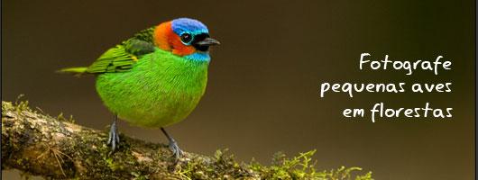 topo_fotografe_pequenas_aves