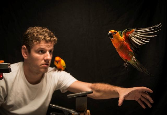 aves-jandaia-1