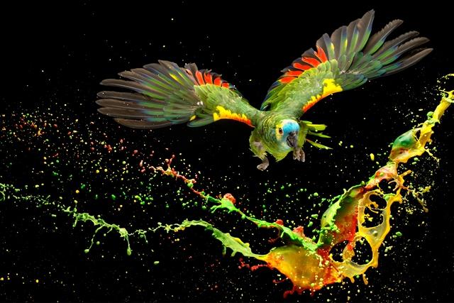 aves-papagaio-1