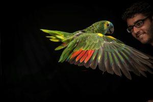 aves-papagaio-2