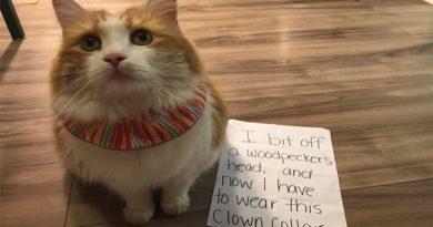 No Canada coleiras de gato coloridas são distribuídas para salvar pássaros