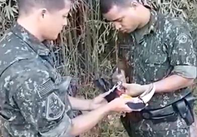 Policiais resgatam tucano preso em linha de pipa